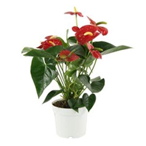 plantes 224 fleurs d int 233 rieur achat plantes jardinerie