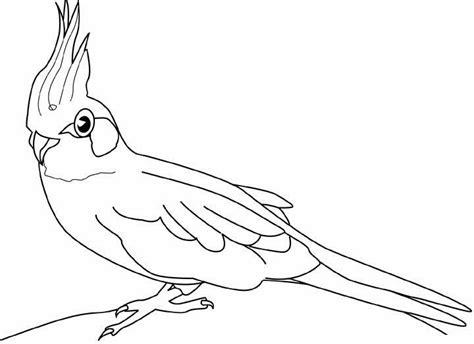 Farben Zum Der Schlafzimmermöbel Zu Malen by Ausmalbilder Malvorlagen Papagei Kostenlos Zum