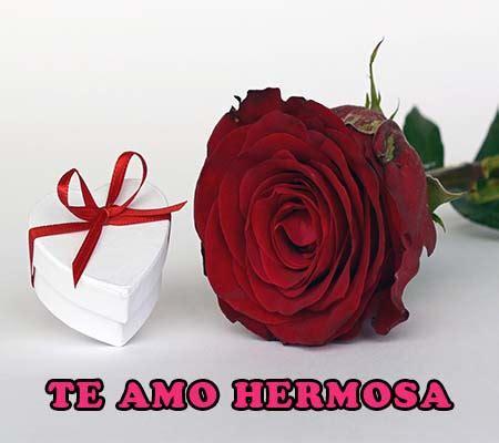 imagenes tiernas rojas imagenes de rosas rojas hermosas rosas de amor
