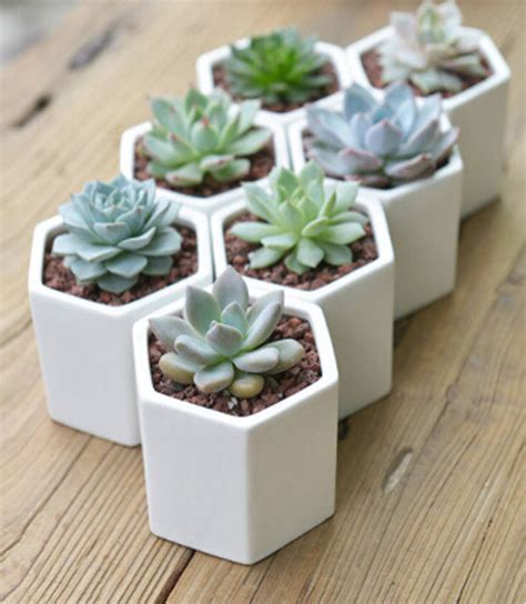 cactus planter hexagon mini planter choice of succulent or cacti by