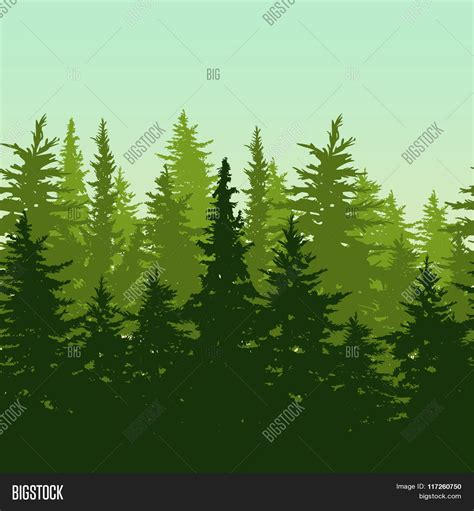 fir green stock photo 169 fritzundkatze 4164584 vector horizontal seamless background with green pine or
