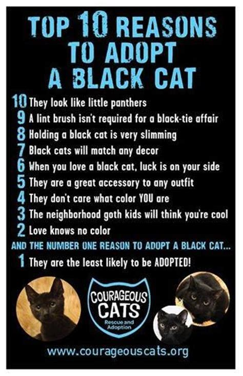 Top 10 Reasons To Adopt A top 10 reasons to adopt a black cat the black cat