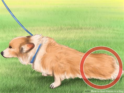 how are rabies for dogs how to spot rabies in a 11 steps with pictures wikihow