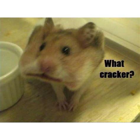8 Reasons I Animals by Hahahahaha