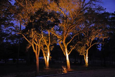 illuminazione alberi progettare giardini e terrazze come illuminare gli alberi