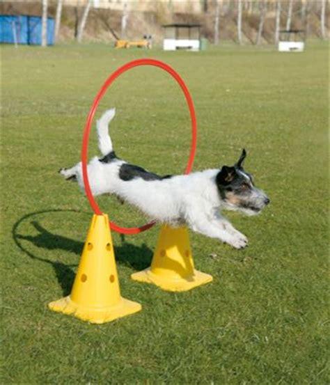 agility equipment for dogs de 25 bedste id 233 er inden for agility p 229 hundetr 230 ning og tip