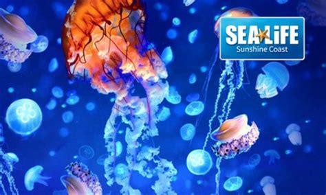 sea life sunshine coast  mooloolaba groupon