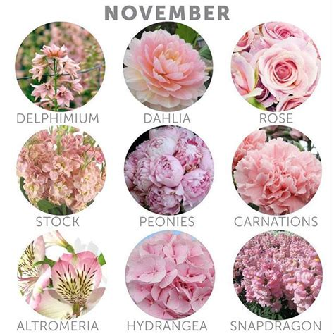 flowers in november best 25 november wedding colors ideas only on
