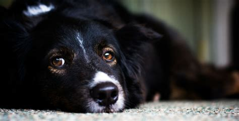 can dogs get depressed 9 top tips to ensure your doesn t get depressed this winter