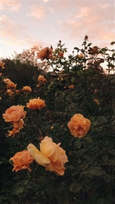 flower wallpaper aesthetic 105 best wallpapers images on pinterest iphone