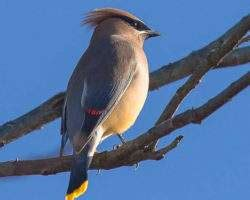 pictures of birds in alabama common birds of alabama alabama birding trails