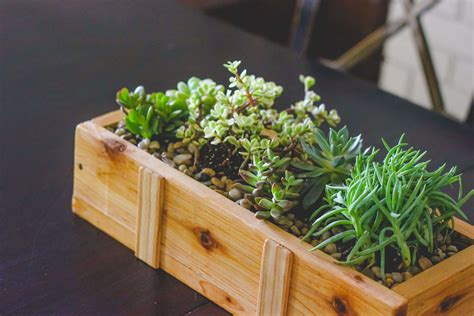 planter for succulents succulent planter diy for under 10 weed em reap