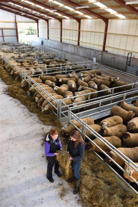 Sheep Sheds Ireland by Thompsons Feeding Innovation