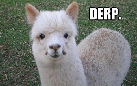 Alpaca Sheep Meme - 49 best images about alpacas on pinterest cat meme