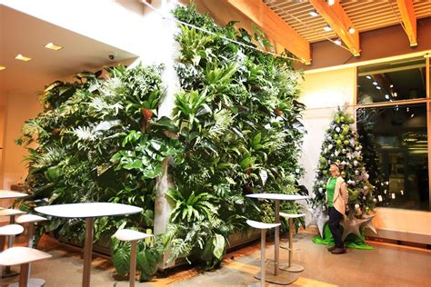 benefits  images indoor plant wall house plants