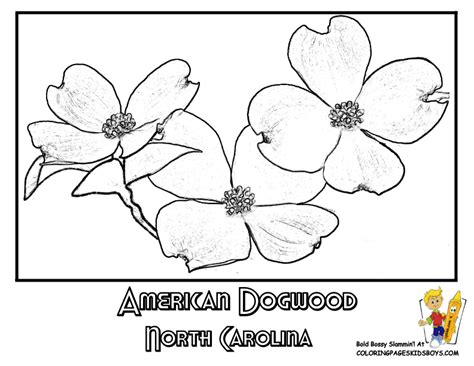 coloring page of dogwood flowers 1000 images about usa coloring pages on pinterest