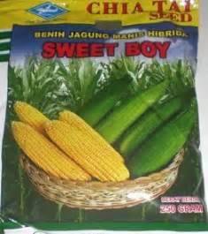 Benih Jagung Manis Sweet Boy jagung manis hibrida sweet boy memetik