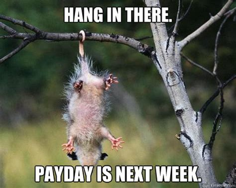 Hang In There Cat Meme - hang in there payday is next week poor possum quickmeme