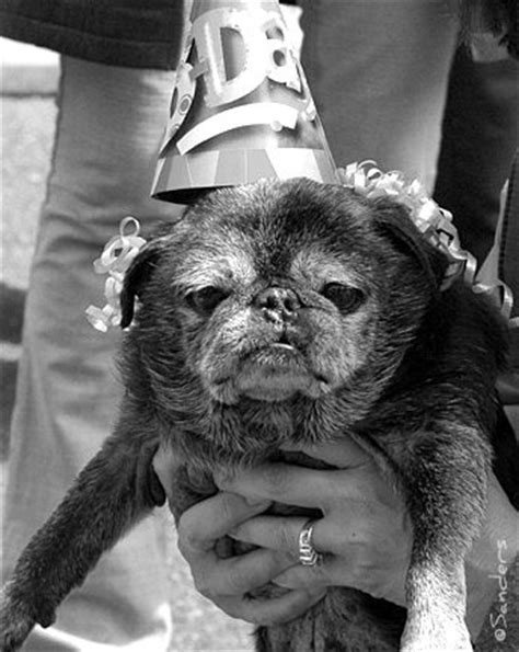 oldest pug pug flickr photo