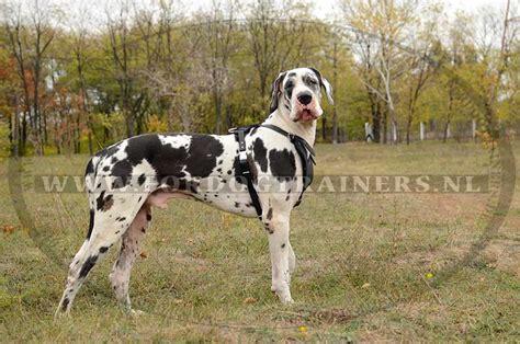 Hondentuig van echt leder voor het trainen van grote honden
