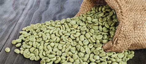 Logreen Coffe green coffee bean extract benefits