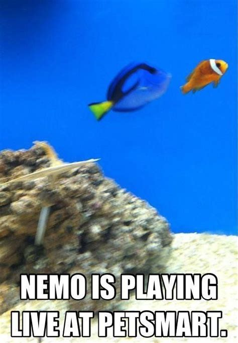 Finding Meme - 17 best images about nemo on pinterest finding nemo
