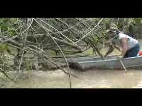 alligator boat alligator attacks boat youtube
