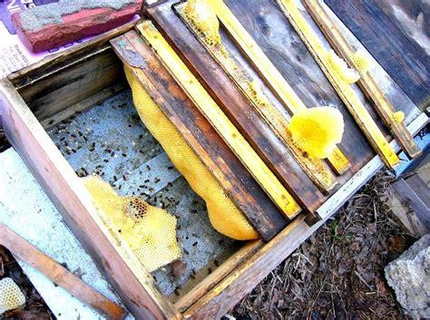 Top Bar Hive Entrance Size by Top Bar Vertical Hives Apis Abeja Abelha Abeille Ape