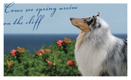 dog house resort and spa maine s cliff house resort spa offers canine massage