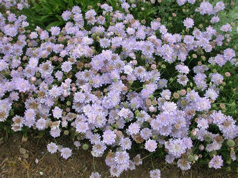 summer blooming perennials hgtv