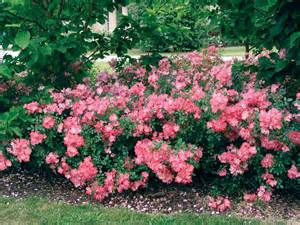 Apple Blossom State Flower - flower carpet roses state by state gardening