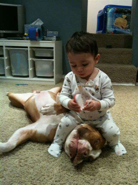 attacks child vicious child attacks helpless pit bull pinpoint