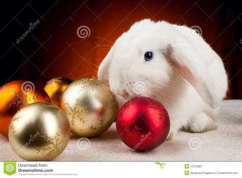 white rabbit new year white new year rabbit on orange light background stock