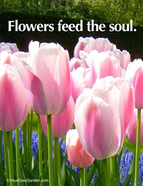 new year feeding the simple garden quotes quotesgram