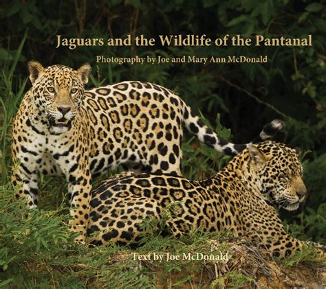 what state are the jaguars from jaguars and the wildlife of the pantanal by joe mcdonald