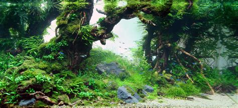 Forest Aquascape the international aquatic plants layout contest 2009 article details articles tfh