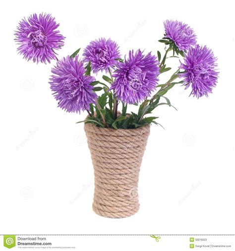 Beautiful Flowers In A Vase by The Beautiful Blue Aster Flowers In A Vase Stock Photos
