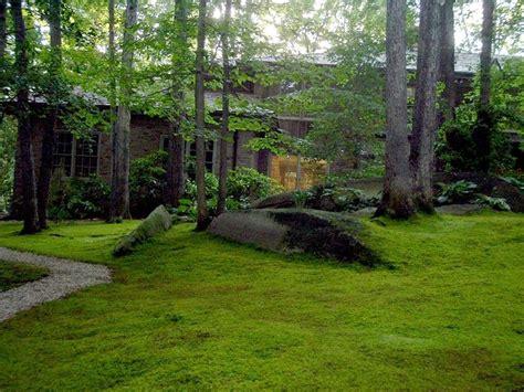 moss backyard moss is boss roll out the green carpet