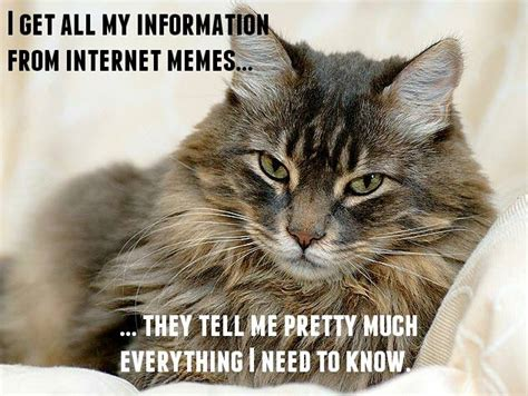 Internet Cat Meme - the bookworm beat 10 12 15 the mammoth monday