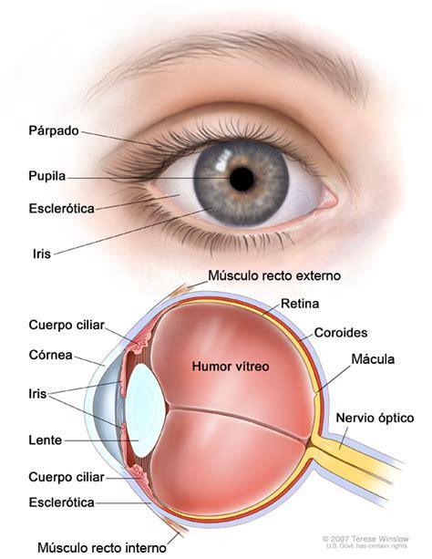 pengertian cross sectional study partes del ojo todo opticas