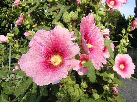 nomi di fiori maschili nomi giapponesi maschili con significato