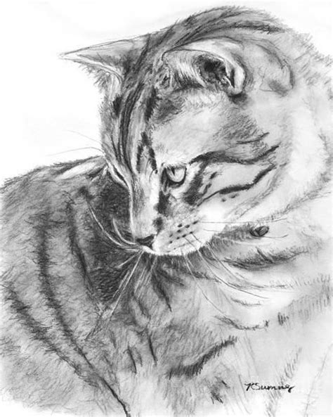 Sketsa Kucing 3d - Mobil Keren Wallpaper