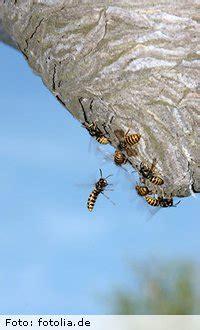 wer entfernt wespennester am haus wespennester beseitigen am haus und im garten