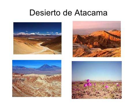 imagenes de flores de la zona norte chile zona norte