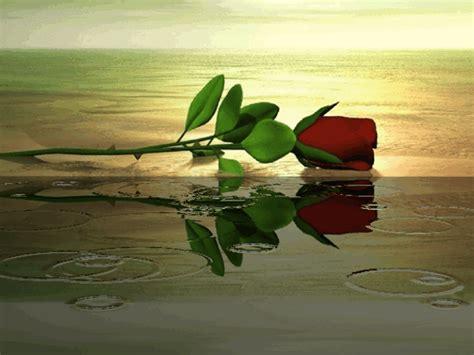 imagenes bonitas de flores y paisajes con frases paisajes de flores 2 mirada a la vida