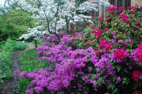 flowering shrub for shade shrubs for shade gardens