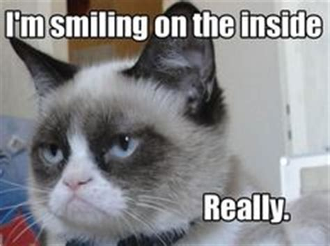 Middle Finger Cat Meme - 1000 images about the cat on pinterest grumpy cat