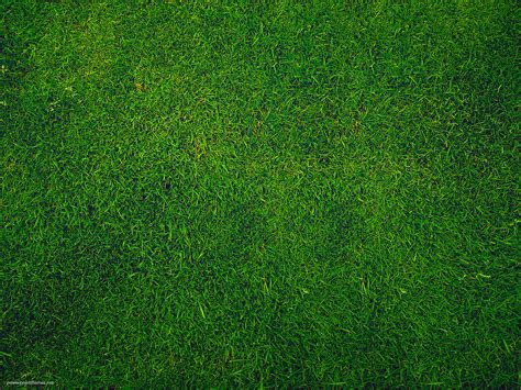 powerpoint themes grass green grass background powerpoint themes