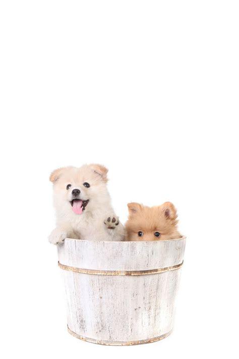 Anjing Lucu Imut 100 foto hewan lucu dan imut yang siap akan menghiburmu