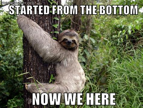 Funny Sloth Memes - sloth slothmeme sloth memes pinterest sloth and animal